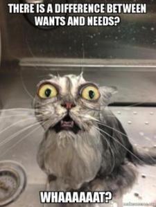 Critial Thinking Cat